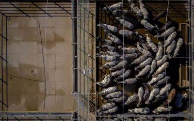 Desmatamento da agropecuária lançou 20 mi de toneladas de gases do efeito estufa na atmosfera