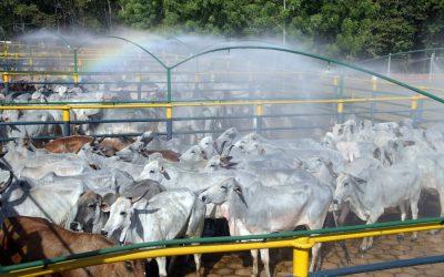 Em 2018 a agropecuária foi responsável por 45% do gases de efeito estufa do Brasil, aponta relatório da Earthsight