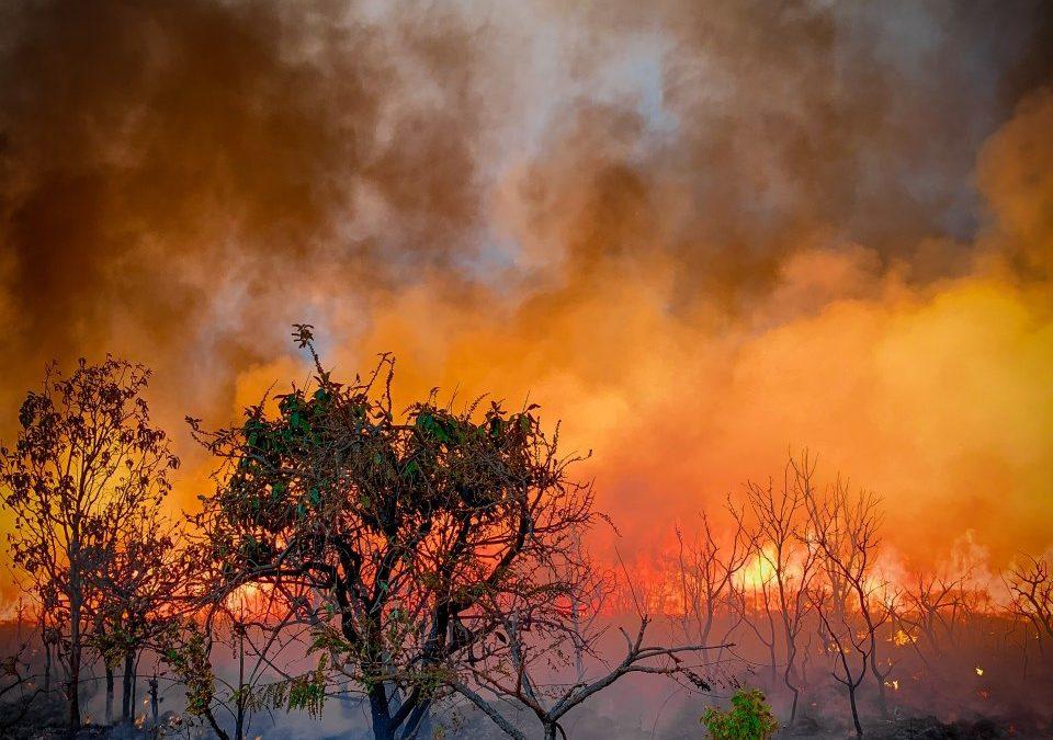 Amazônia tem piores queimadas dos últimos 10 anos; Pantanal o pior mês da história