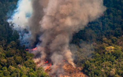 Sinal de Fumaça: Jornalistas lançam monitor de ataques à política socioambiental no Brasil
