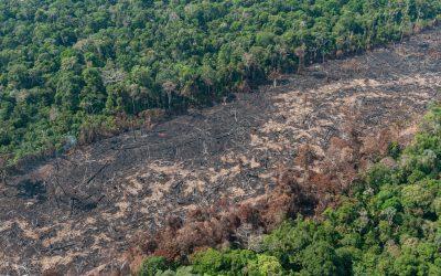 Governo do Amazonas decreta situação de emergência ambiental
