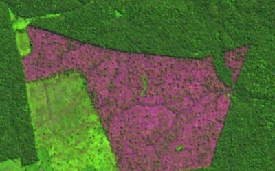 Amazônia: Desmatamento acumulado nos últimos 11 meses já é o pior da última década