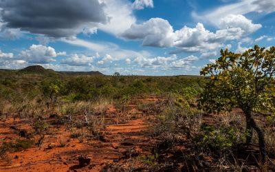 """Se desmatamento continuar, metade da Amazônia pode virar """"savana tropical"""", alerta pesquisador"""