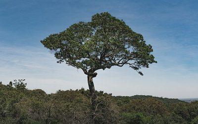 Garimpo nas Florestas Nacionais é tema de novo Aulão da Mídia NINJA