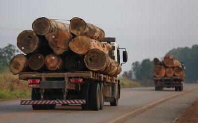 No Amapá, invasores retiram árvores de área equivalente a 100 campos de futebol