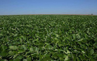 """Soja """"devora"""" o pampa, bioma que mais sofre com perda de vegetação e biodiversidade"""